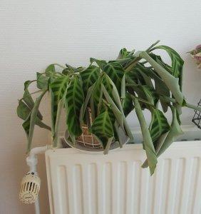 Plant met te weinig licht