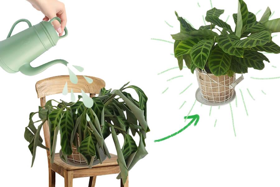 Help, waarom gaan mijn planten dood