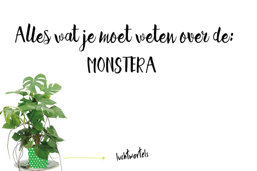 Monstera illustratie