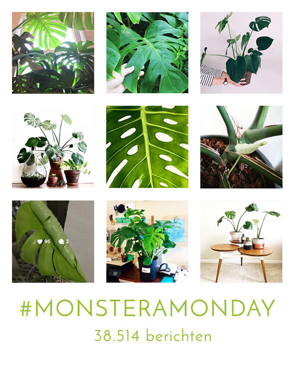 Monsteramonday